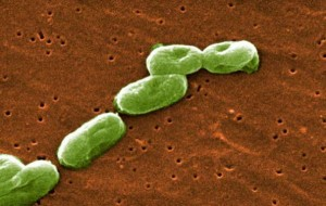 bacteria mortal escapa